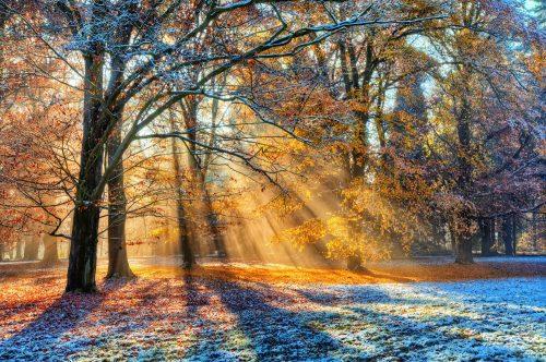朝日が紅葉が木漏れ日